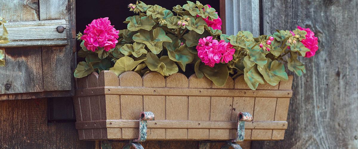 Balkonpflanzen Herbst