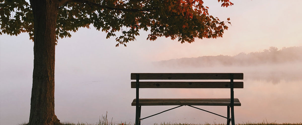 Eine Bank und ein Baum in einer nebeligen Herbstlandschaft.